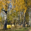 Stock Photo: Apiary in autumn