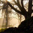 Stock Photo: Autumn morning mist in park