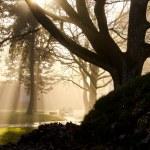 Autumn morning mist in the park — Stock Photo #7565748