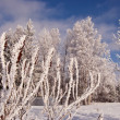Stock Photo: Winter hoar on tree
