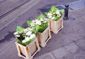Blommor på gatan — Stockfoto