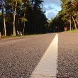 Asphalt road in the resort forest - Stock Photo
