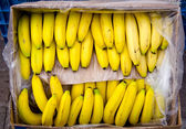 A stem of bananas in the box — Stock Photo