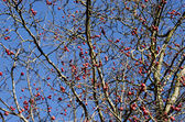 Red autumn apples on tree and sky — Stock Photo