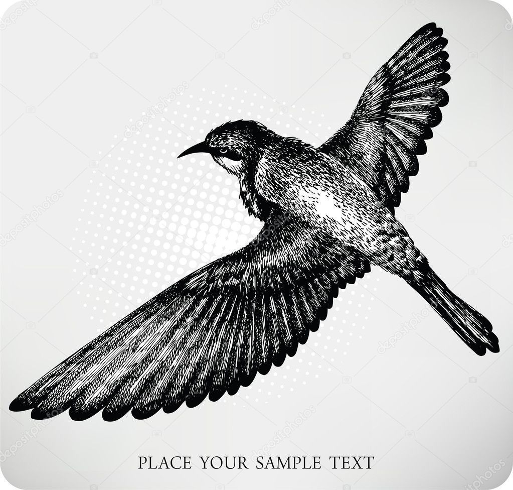 黑白花纹的鸟