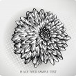 Chrysanthemum flower hand drawn. Vector illustration — Stock Vector