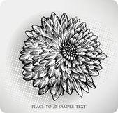 Chrysanthemum flower hand drawn. Vector illustration — Stock Vector
