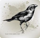 Bird sitting on a branch, Hand drawn. Vector illustration — Stock Vector