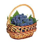 Weidenkorb mit bürsten aus dunklen trauben — Stockfoto