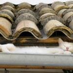 Cat family — Stock Photo