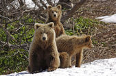 Nature of Kamchatka — Stock Photo