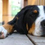Dog, dog, friend, pets, puppy — Stock Photo #7473811