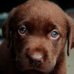 Dog, dog, friend, pets, puppy — Stock Photo