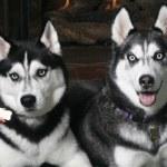 Dog, dog, friend, pets, puppy — Stock Photo #7473821