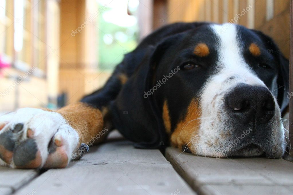 Dog, dog, friend, pets, puppy  Stock Photo #7473811