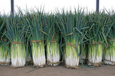Green onions — Stock Photo