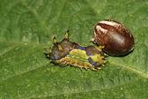 Insects — Zdjęcie stockowe