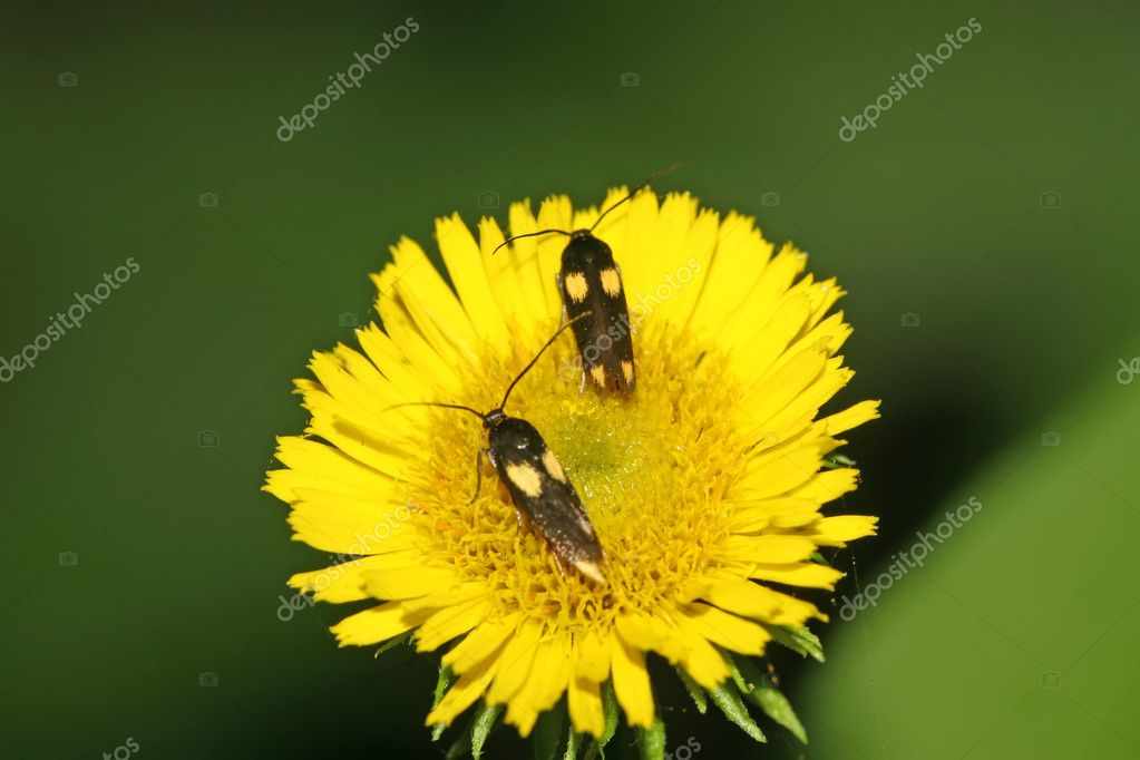 A kind of moths insects — Stockfoto #7120261
