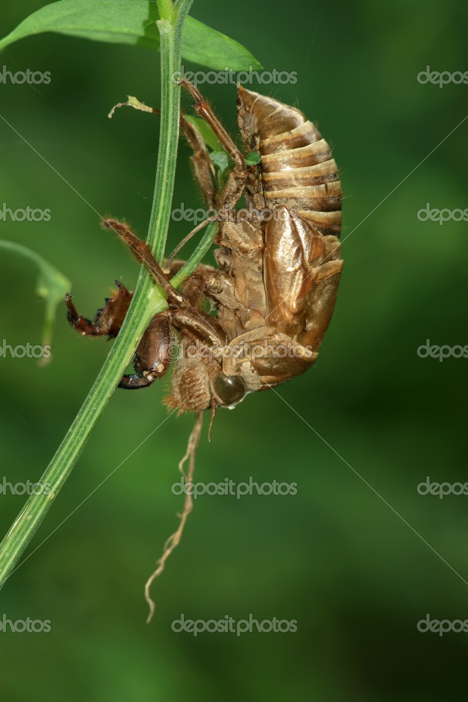 A kind of insects shell — Stock Photo #7120441