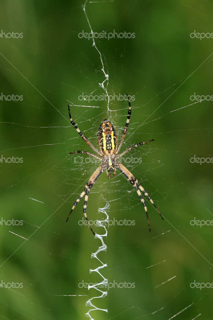 A spider insects networks photography  Foto de Stock   #7120507