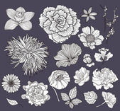 Set of flowers. Floral elements. — Vector de stock