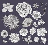 Uppsättning av blommor. blommig element. — Stockvektor