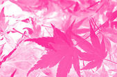 Abstract pink leaf background. — Stock Photo