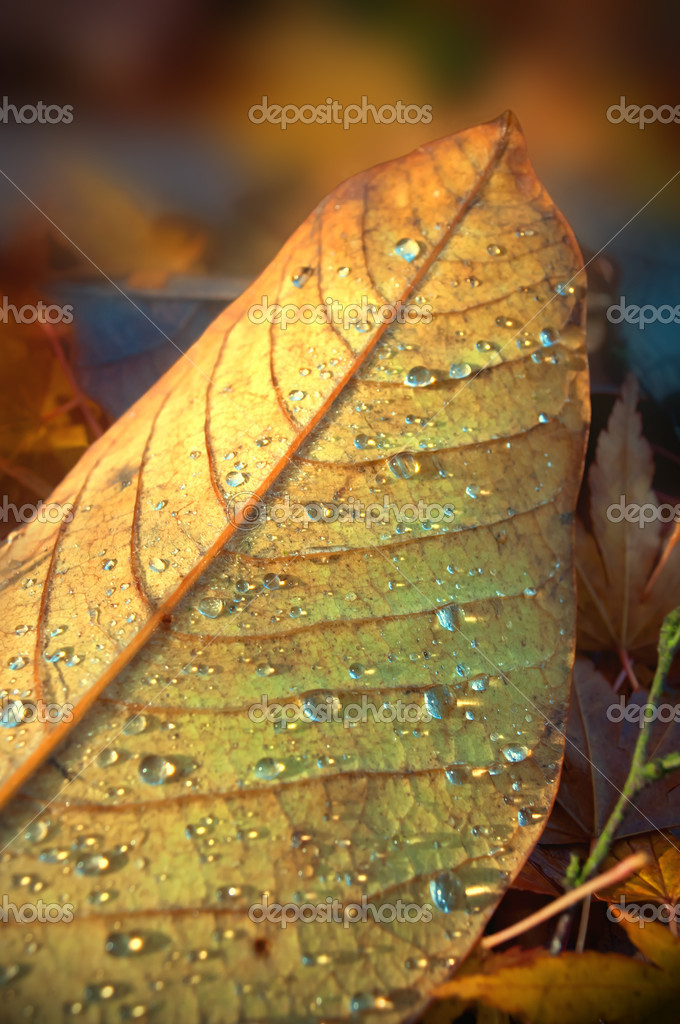 Close up on a fallen autumn leaf with drpplets of thawed frost. Blurred leaf background. — Stock Photo #7464748