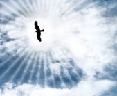 A bird flying in the blue sky — Stock Photo