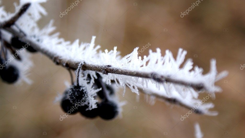 Autumn frosts in nature — Stock Photo #7677036