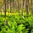 Natural Forest with Fern Plants — Stock Photo #7248418
