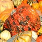 Pumpkin background — Stock Photo #7256614