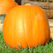 Orange pumpkin — Stock Photo #7256667
