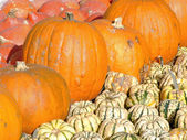 Mixed pumpkins — Foto Stock