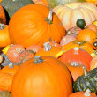 Pumpkin background — Stock Photo #7289819