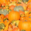 Pumpkin background — Stock Photo #7651742