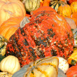 Pumpkin background — Stock Photo #7651754