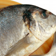 Gilthead bream — Stock Photo