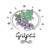 Wine grape — Stock Vector