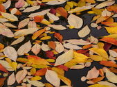 Colorful leaves - closer — Stock Photo