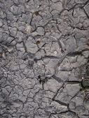Drought - dry land - texture — Stock Photo