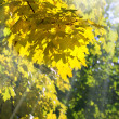 Golden tree foliage — Stock Photo #7491851