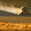 Harvest time - Stockfoto