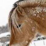 A Horse — Stock Photo #7384184