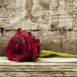Red rose on documents - Stock Photo
