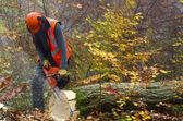 Lumberjack — Stock Photo