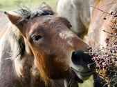 Un caballo — Foto de Stock