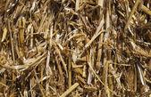 The Straw texture — Stock Photo