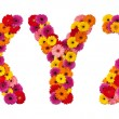 Letter X Y Z - flower alphabet isolated on white - Stock Photo