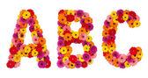 Lettre a b c - alphabet fleur isolé sur blanc — Photo